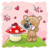 Cute cartoon Teddy Bear with a camera. On the meadow Stock Images