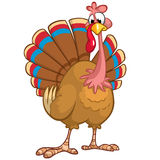 Cute cartoon Thanksgiving turkey Royalty Free Stock Photography