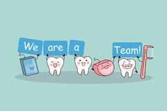 Cute cartoon tooth with floss. We are a team - cute cartoon tooth with floss and floss pick, great for health dental care concept Royalty Free Stock Images