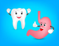 Cute cartoon tooth with healthy stomach. Stock Images