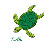 Cute cartoon turtle. Ocean animal vector illustration. Sea creature in a funny, hand drawn style Stock Photos