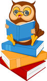 Cute cartoon wise owl read a book Stock Images
