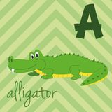 Cute cartoon zoo illustrated alphabet with funny animals: A for Alligator. English alphabet. Learn to read. Vector illustration royalty free illustration