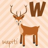 Cute cartoon zoo illustrated alphabet with funny animals. Spanish alphabet: W for Wapiti. vector illustration