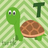 Cute cartoon zoo illustrated alphabet with funny animals: T for Turtle. English alphabet. Learn to read.  Vector illustration Royalty Free Stock Image