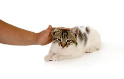 Cute cat Stock Photos