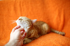 Cute cat. A hand stroking a cat under it's chin Royalty Free Stock Photos