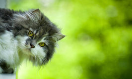 Cute cat. Cat's head - looking at camera Stock Photography