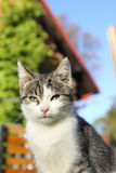 Cute cat. In the sun Stock Photo