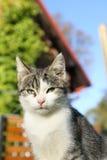 Cute cat. In the sun stock photo