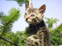 Cute cat. On the tree royalty free stock images