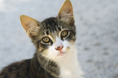 Cute cat. With big eye looking on camera Stock Photography