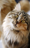Cute cat. It is a pair of eyes that can speak. It is really too lovely Stock Photo