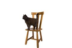 Cute Cat. A cute black cat standing on a chair royalty free stock photo