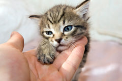 Cute cat. Cute young cat, putting on human hand Stock Photo