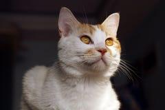 Cute Cat. Royalty Free Stock Photo