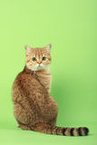 Cute cat Royalty Free Stock Image