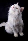 Cute cat. Stock Image