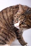Cute cat. Stock Photography