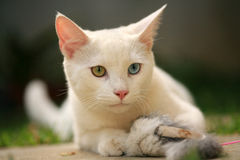 Cute Cat. A portrait of a cute white cat Stock Image