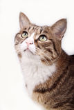 Cute cat. Stock Photos