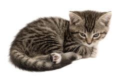 Cute cat Stock Images