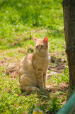 Cute Cat. Cute little cat sitting on the grass Royalty Free Stock Photos