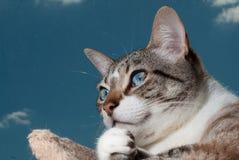 Cute cat against the sky Stock Photo