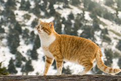 Cute cat against the snowy trees. Royalty Free Stock Photography