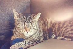 Cute cat asleep on sofa Royalty Free Stock Photos