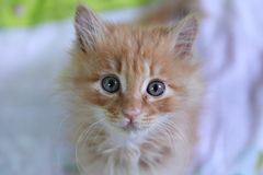 Cute cat baby stock images
