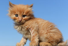 Cute cat baby stock photo