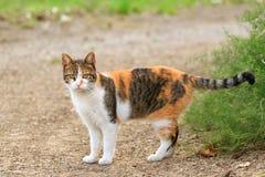 Cute cat in backyard. Cute colorful cat in backyard stock photo