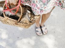 Cute cat in basket, woman walking out with her pet in warm summe. R day, space for text Stock Image