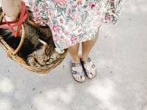 Cute cat in basket, woman walking out with her pet in warm summe. R day, space for text Stock Photos