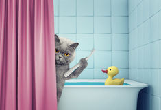 Cute cat in the bath. Clean the teeth Royalty Free Stock Photography