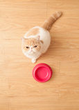 Cute cat beging food Royalty Free Stock Photography
