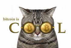 Cat in bitcoin glasses 2. The cute cat is in bitcoin glasses. White background royalty free stock photography