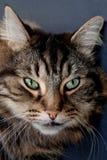 Cute cat on black background Stock Photos