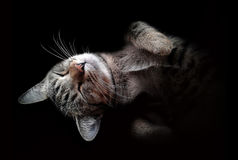 A cute cat on black background.  royalty free stock photo