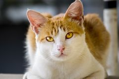 Cute cat with a blank expression Stock Images