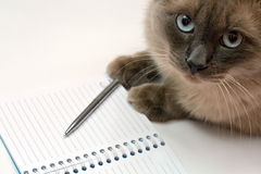 Cute cat and blank open notebook. Funny business concept - cat, pen and blank open notepad Stock Photos