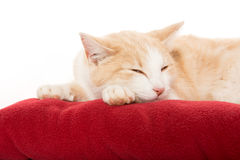 Cute cat on blanket Stock Image