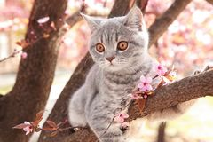 Cute cat on blossoming tree outdoor. S royalty free stock images