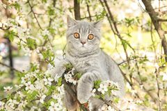Cute cat on blossoming tree. Outdoors royalty free stock image