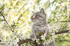 Cute cat on blossoming tree. Outdoors royalty free stock images