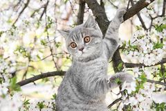 Cute cat on blossoming tree outdoors Stock Photo