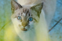 Cute cat with blue eyes playing inside an empty pool Royalty Free Stock Image