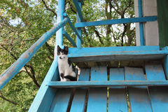 Cute cat on blue stairs Stock Images