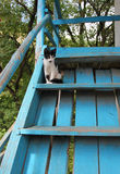 Cute cat on blue stairs Stock Photo